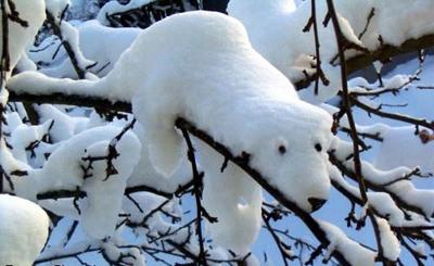 Угадываем фигуру из снега на ветках