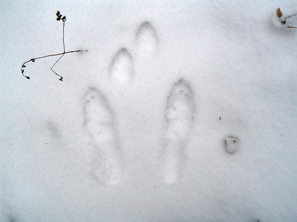 Угадываем следы на снегу