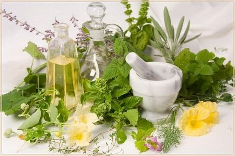 Лекарственные травы при беременности