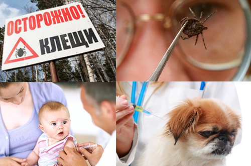 Чем опасен энцефалит детям