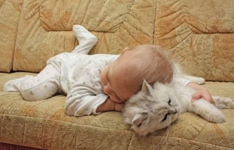 Живая подушка