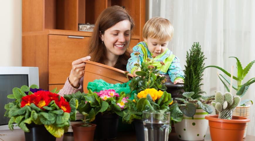 Комнатные растения, которые опасны для детей