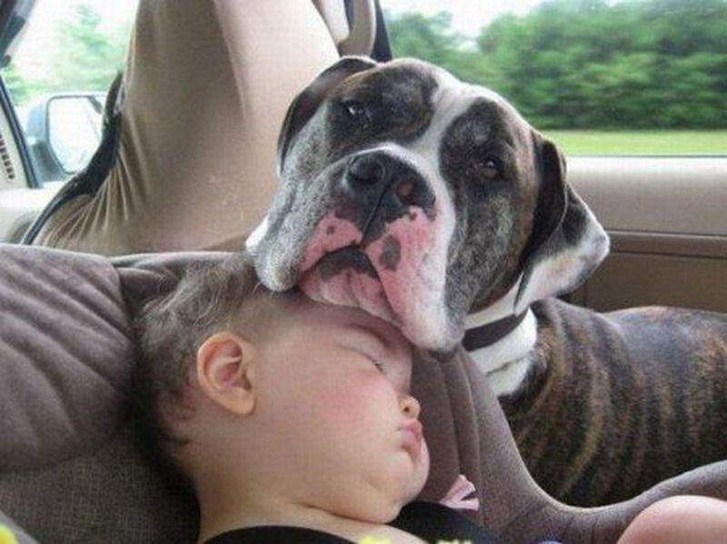 Сладкий сон. Подборка спящих детей и животных (19 фото)