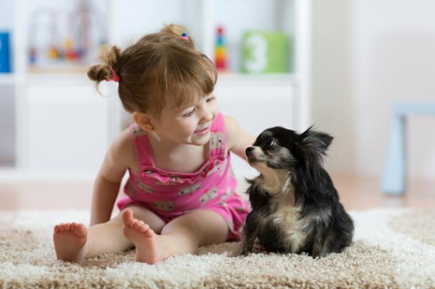 Домашние животные: заводить или не заводить?